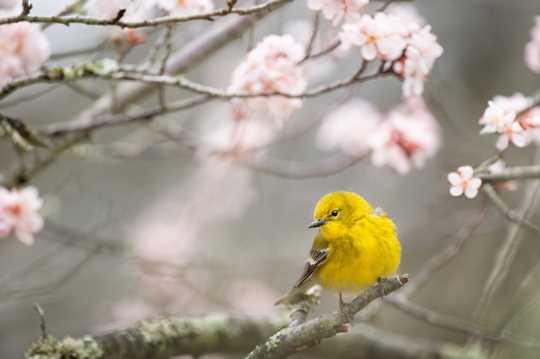 春季小鸟唯美图片