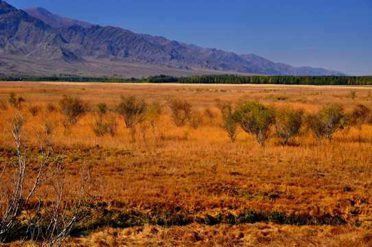 新疆温泉县秋季景色图片
