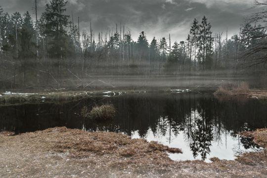 湿润的沼泽光景图片