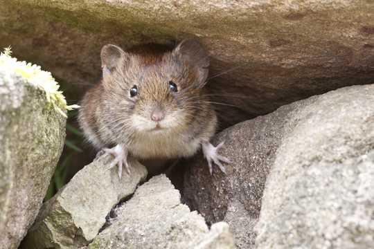 萌死人的仓鼠图片
