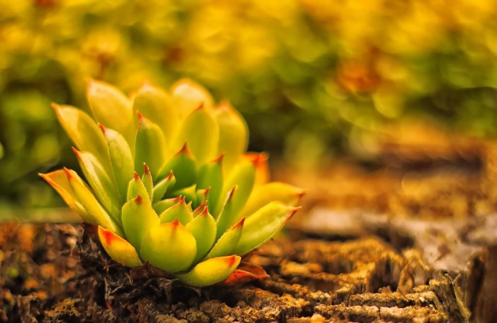 地球,仙人掌,molodilo,模糊,植物