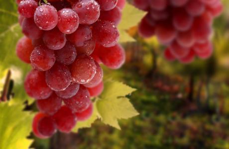 一束,叶子,滴,葡萄