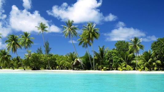棕榈树,沙滩。更多,热带岛屿,海洋,水,沙子