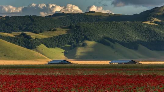 山,森林,天空,云,田地,鲜花,美女,罂粟,太阳