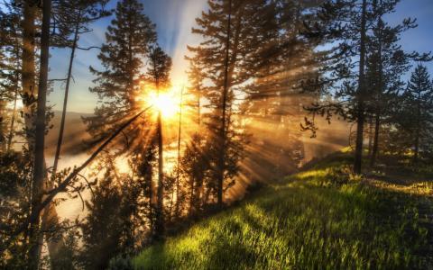 森林,山,自然,早晨,雾,极端,放松