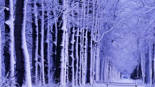 冬天,胡同里的雪,桥
