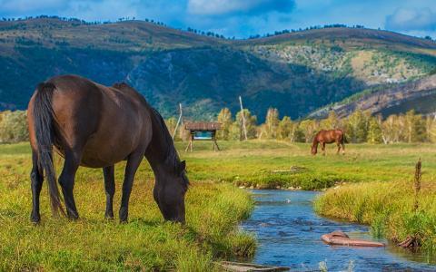 马,放牧,溪流,山