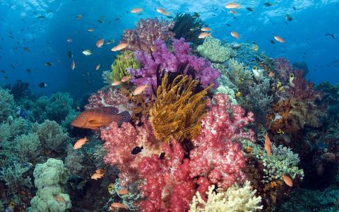 珊瑚,鱼,印度尼西亚