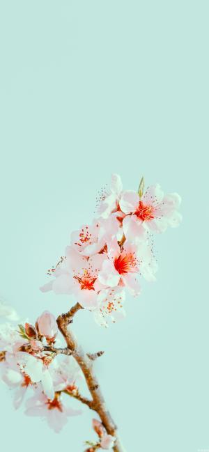 三月的桃花