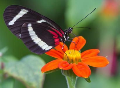 蝴蝶,宏,花卉,蝴蝶世界,美丽,昆虫的世界