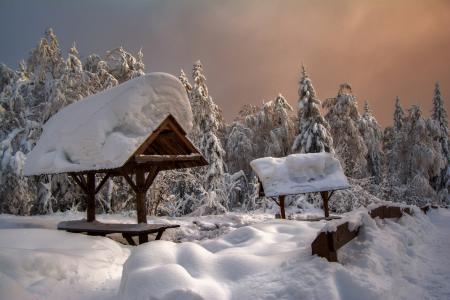 冬天,森林,雪,塔加奈,南乌拉尔,莎拉波夫安德烈