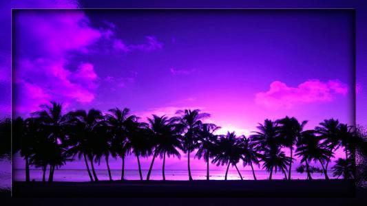 岸,棕榈树,海,天空,紫色的颜色,高清