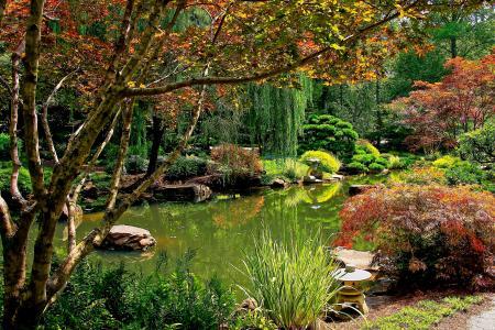 公园,池塘,球场吉布斯花园,灌木,性质