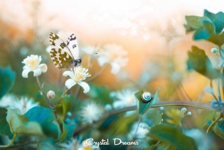 性质,分支机构,花朵,蝴蝶,蜗牛,叶子,宏