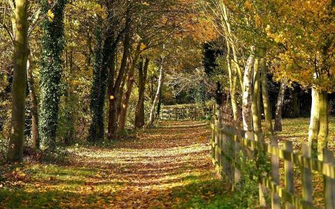 森林的路径,清洁的空气,篱笆