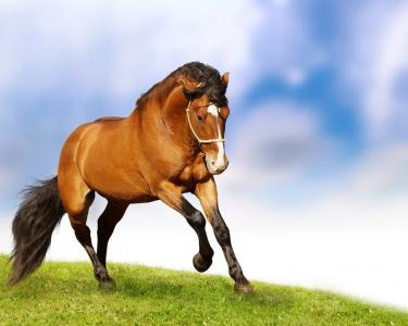 草,草地,马,速度