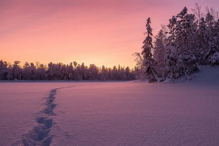 冬天,雪,自然,美丽