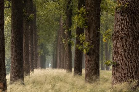 自然,森林,公园,树木,草