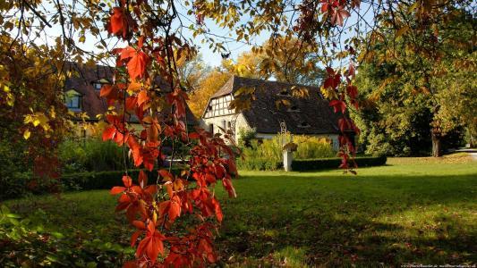 红色的传单,树枝,小房子