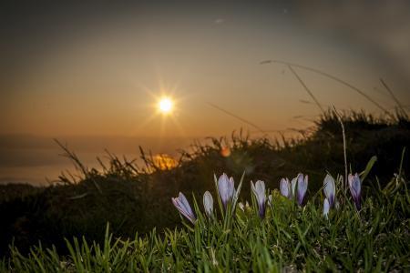 性质,宏观照片主题,山,鲜花,番红花,美丽,春天