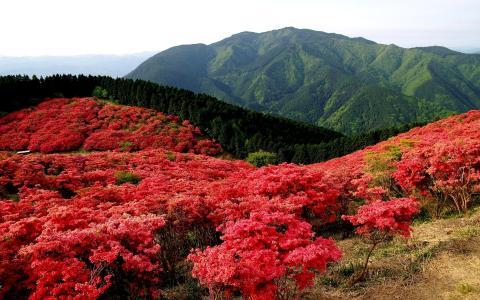 春天,性质,山,森林,开花,美女