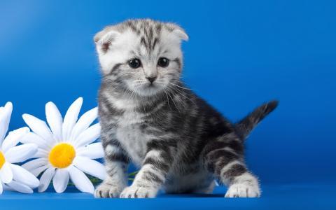 猫,霜降,小猫,动物