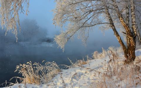 雾,河,桦木,性质,雪,冬天,景观
