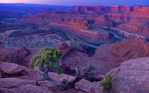峡谷,河,树,天空,地平线,美女