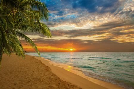 日落,沙滩,海,岸,天堂,热带,沙滩,海,沙滩,日落,沙滩,沙滩,棕榈树