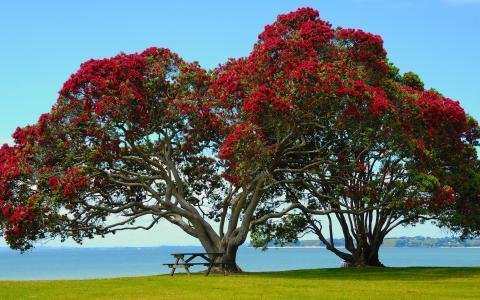 浪漫,美丽,海,树