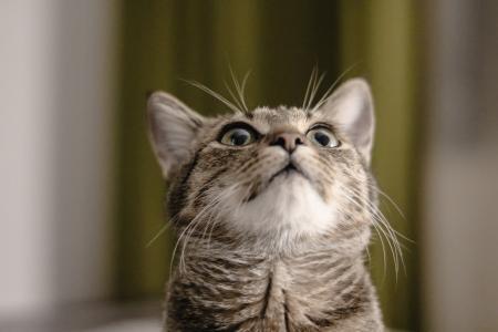 傲娇可爱的小猫咪