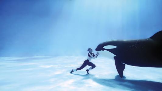 虎鲸,游泳池,鲸鱼,捕食者,照片,水下