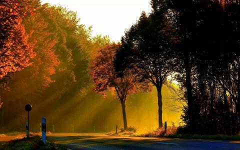 秋天,树木,金色的光芒