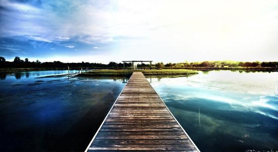 钓鱼,池塘,码头,小岛,美丽