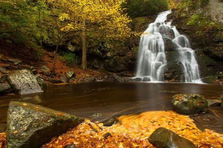 茂密,森林,瀑布,溪流,树木,美景