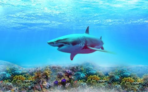鲨鱼,深度,植物,底部,3d