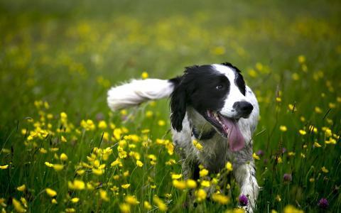 狗,快乐,花,领域