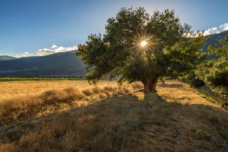 自然,树,橄榄,山,谷,天空,太阳,光线