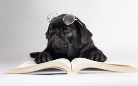 眼镜,书,狗