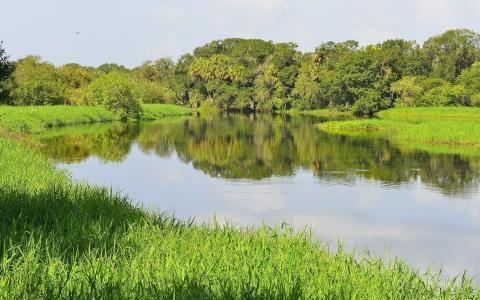 自然,夏天,河,钓鱼,镜子,美丽