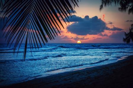 巴巴多斯,加勒比海,晚上,海滩,日落,太阳