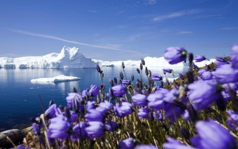 霜,冰山,海洋,冰川,雪,北极,冰