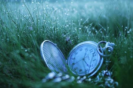 时钟,草,露水,宏
