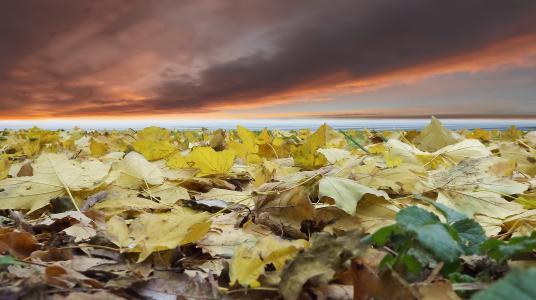 叶子,秋天,天空,河口,hadjiibei,敖德萨,谢尔盖科谢列夫