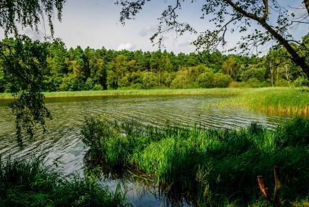 自然,森林,池塘,钓鱼,美丽