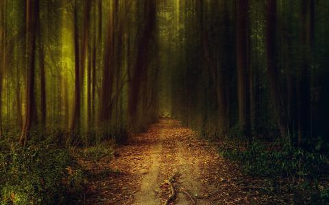路径,黑暗,树,夜,叶,孤