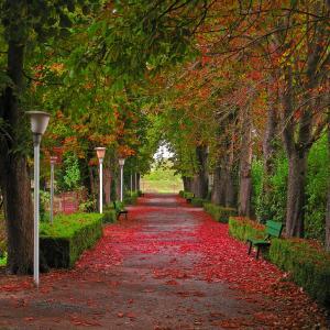 公园,走道,秋天,美丽