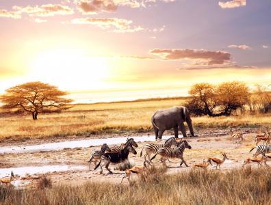 非洲,羚羊,大象,热带稀树草原,斑马,动物,非洲,热带稀树草原