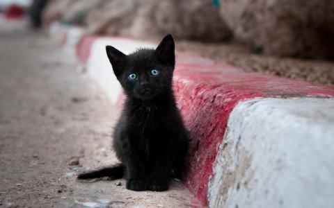街头,混蛋,猫咪,孤独