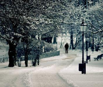 雪,人,商店,树,灯笼,扎马